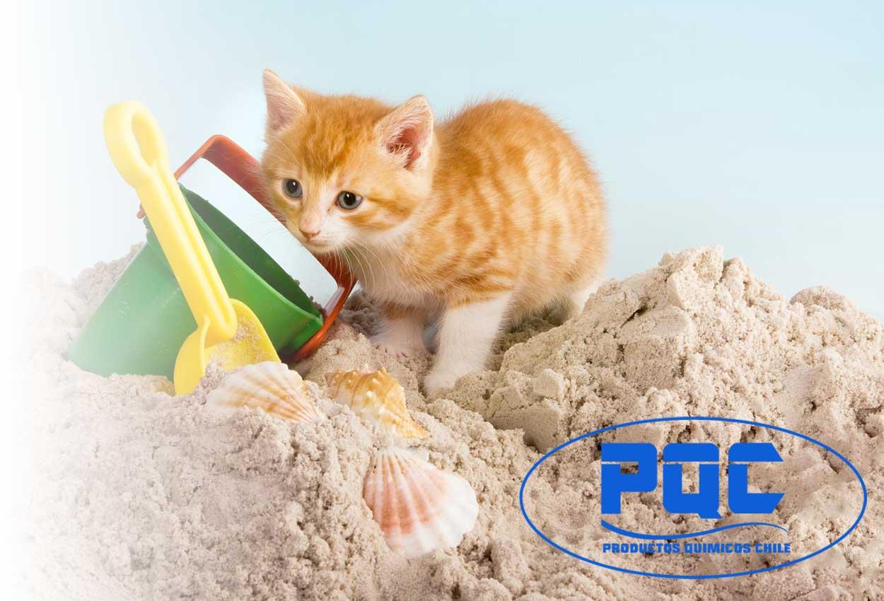 arena-para-gatos